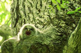 巣穴から親鳥を呼ぶの写真・画像素材[721287]