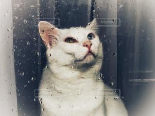 大雨ダニゃの写真・画像素材[1412574]