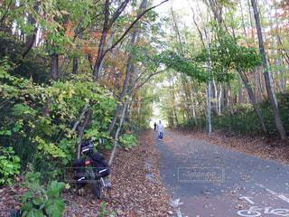 秋の散歩道の写真・画像素材[1558709]