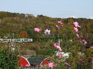 秋の北海道の写真・画像素材[1558711]