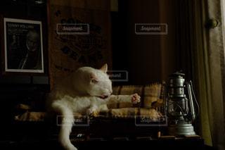 猫専用ソファーの写真・画像素材[1718800]