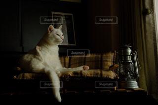 猫専用ソファーの写真・画像素材[1718801]