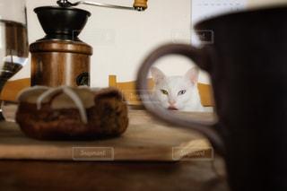Coffee Breakの写真・画像素材[1860084]