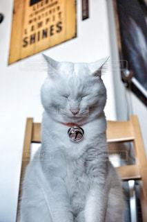 反省なんて猫でもできる。の写真・画像素材[2110115]