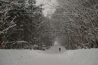 北海道スノーシュー体験の写真・画像素材[2928555]
