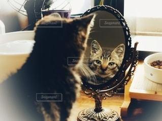 猫と鏡の写真・画像素材[3539467]
