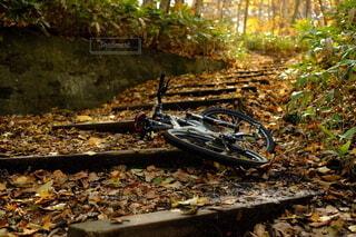 秋のポタリングの写真・画像素材[3857237]