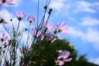 近くの花のアップの写真・画像素材[1372287]