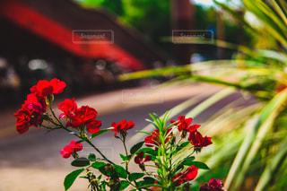 道の花💐の写真・画像素材[2640955]