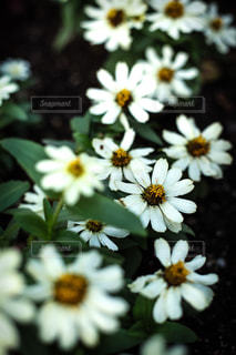 花の写真・画像素材[2640970]