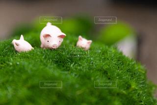 豚さんの家族の写真・画像素材[4536264]