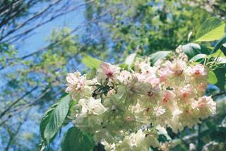 花の写真・画像素材[468539]