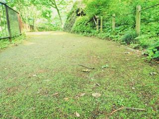 自然 - No.509571