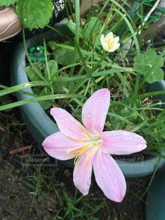 植物にピンクの花の写真・画像素材[753751]