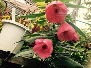 植物にピンクの花の写真・画像素材[757783]