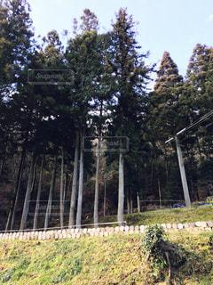 森林の写真・画像素材[345717]