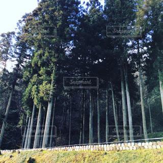 森林の写真・画像素材[345718]