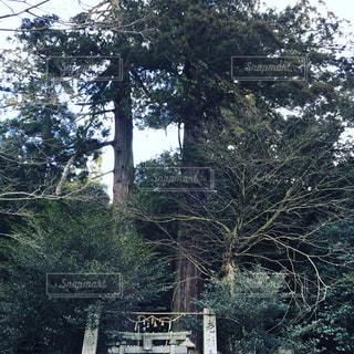 森林の写真・画像素材[345719]