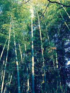 No.345733 森林