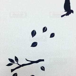 鳥の写真・画像素材[345883]