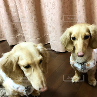 犬の写真・画像素材[347744]