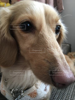 犬の写真・画像素材[347745]