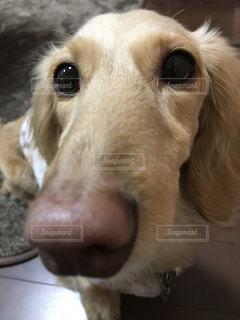 犬の写真・画像素材[347749]