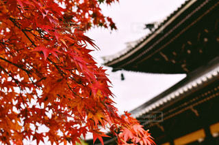 秋の写真・画像素材[345840]