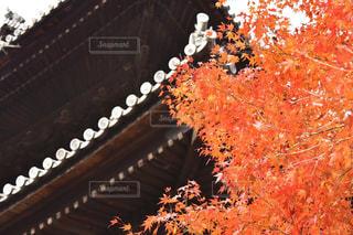 秋の写真・画像素材[345843]