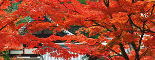 秋の写真・画像素材[345912]