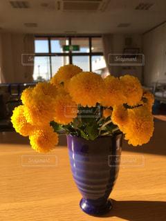 花の写真・画像素材[346049]