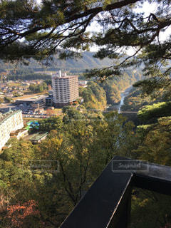木からの都市の眺めの写真・画像素材[345948]