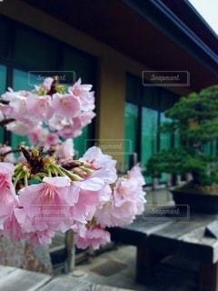 テーブルの上の花瓶の写真・画像素材[2716502]