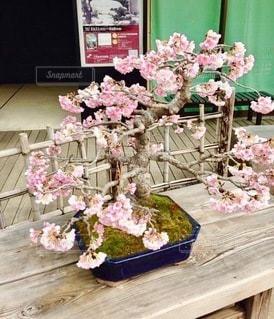 テーブルの上のピンクの花のグループの写真・画像素材[2716499]