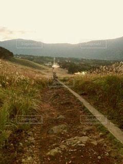 丘の側に木がある小道の写真・画像素材[2716541]