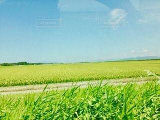 緑の野原のクローズアップの写真・画像素材[2720625]