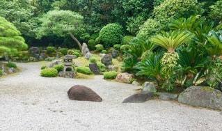 庭の植物の写真・画像素材[2723030]