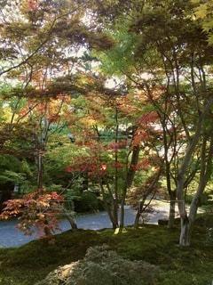 公園の木の写真・画像素材[2723053]