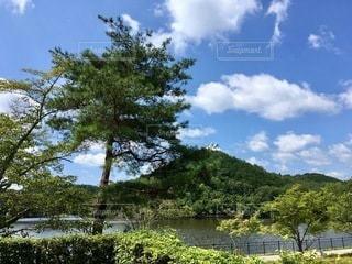 水域の隣の木の写真・画像素材[2762953]