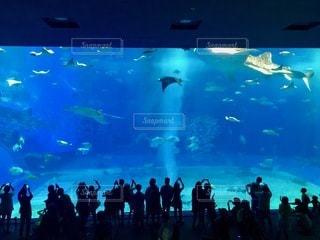 沖縄美ら海水族館を背景に群衆の前でステージに立つ人々のグループの写真・画像素材[2764072]
