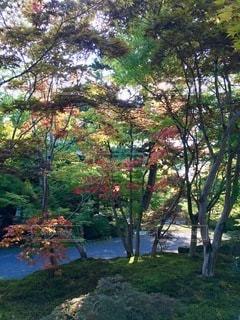 森の中の木の写真・画像素材[2764091]