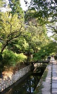 川に架かる橋の写真・画像素材[2764097]