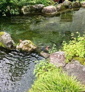 水の池の写真・画像素材[2773522]