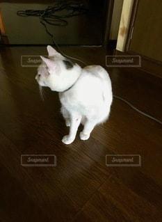 猫が床に立っているの写真・画像素材[2782586]