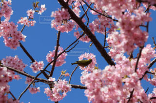 春 - No.346346