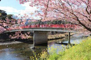 春の写真・画像素材[346354]