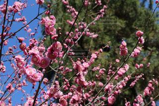 花の写真・画像素材[350755]