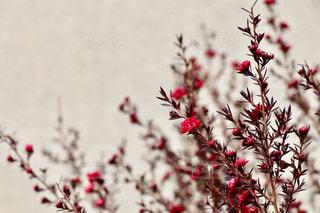 花の写真・画像素材[372593]