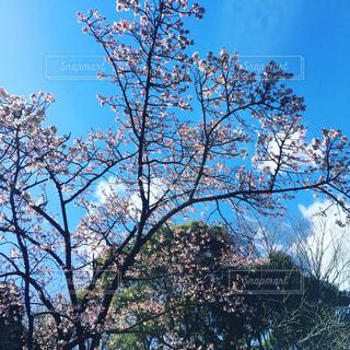 上野公園の写真・画像素材[346118]