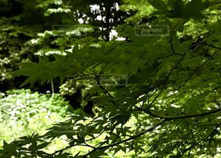 自然の写真・画像素材[568780]